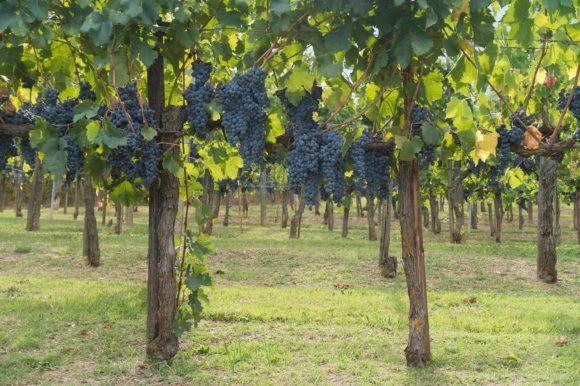 På vespa i Toscana